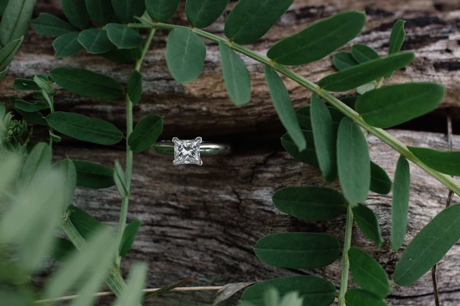engagement ring wood and greenery