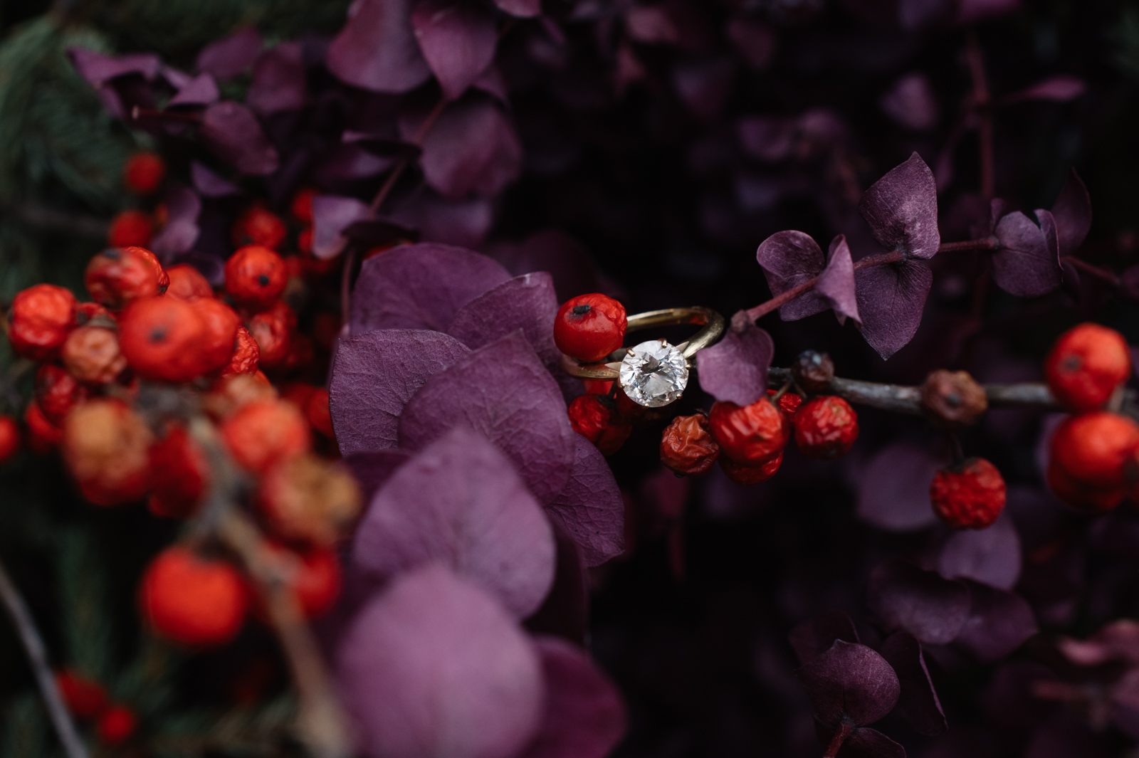 engagement ring in bush with berries