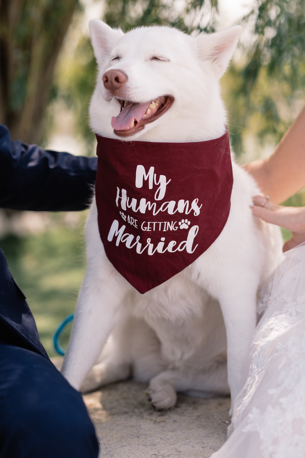 dog with bride and groom epic event center wedding venue
